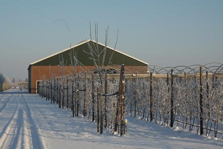 Kleinfruitboerderij