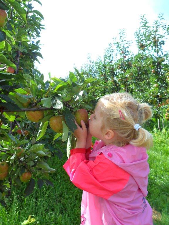 Kennismaken met fruit