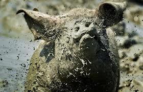 Moddervarken