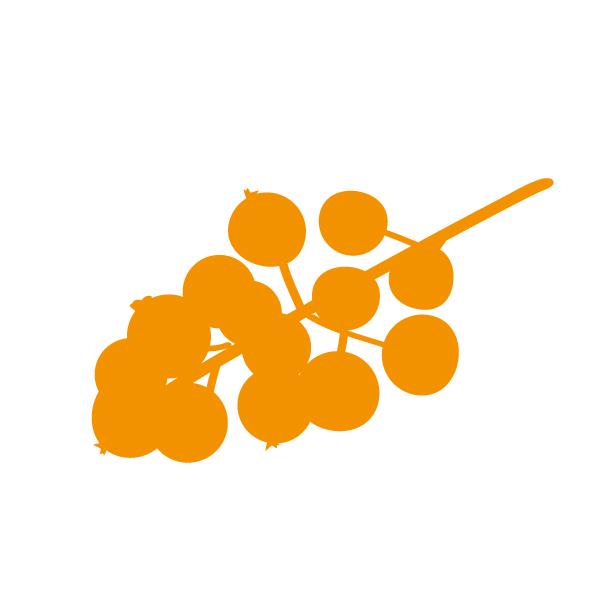 Op dit bedrijf worden fruitsoorten als bessen, bramen en frambozen geteeld.
