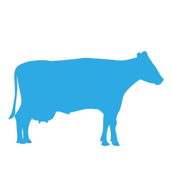 Op dit bedrijf worden koeien gehouden voor de melkproductie. Bij sommige bedrijven vindt tevens verwerking van de melk plaats tot bijvoorbeeld kaas of ijs.