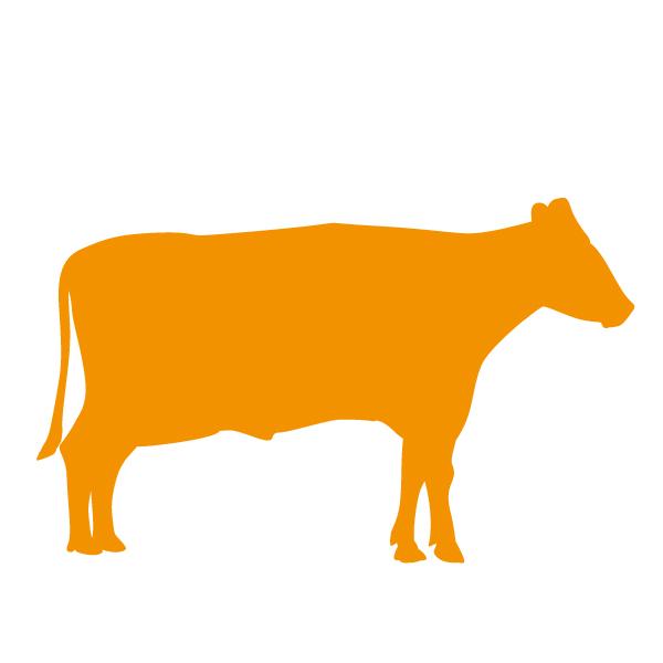 Op dit bedrijf worden koeien gehouden voor vleesproductie of hobbymatig naast een andere hoofdactiviteit.